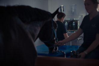 Vacature kliniekassistent voor de paardenafdeling (m/v)