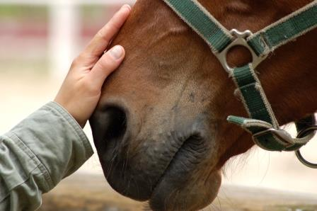 Vacature stalmedewerker paardenafdeling (m/v)